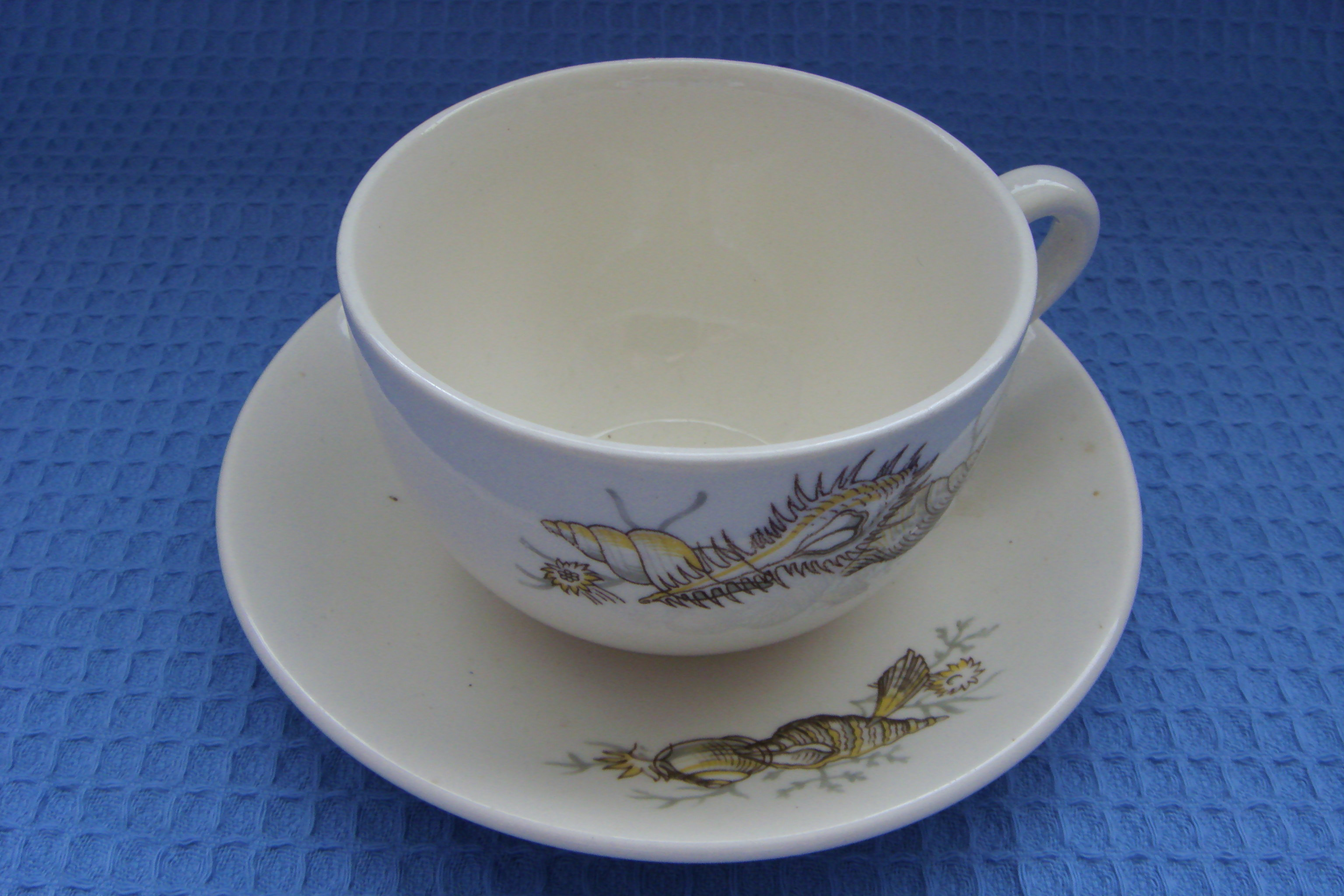 SEASHELL DESIGN CUP & SAUCER FROM THE ORIENT LINE